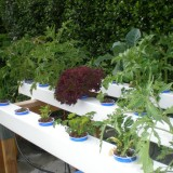 Expanded Clay in Hydroponics