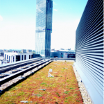 Manchester Green Roof