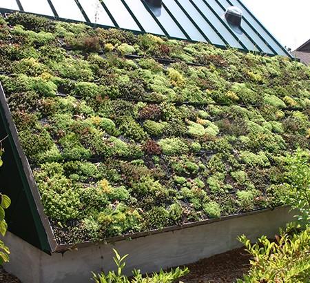 green-roof-birmingham